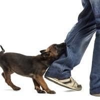 Bach bloesem remedies voor honden