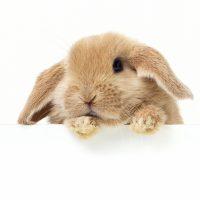Bach bloesems voor konijnen